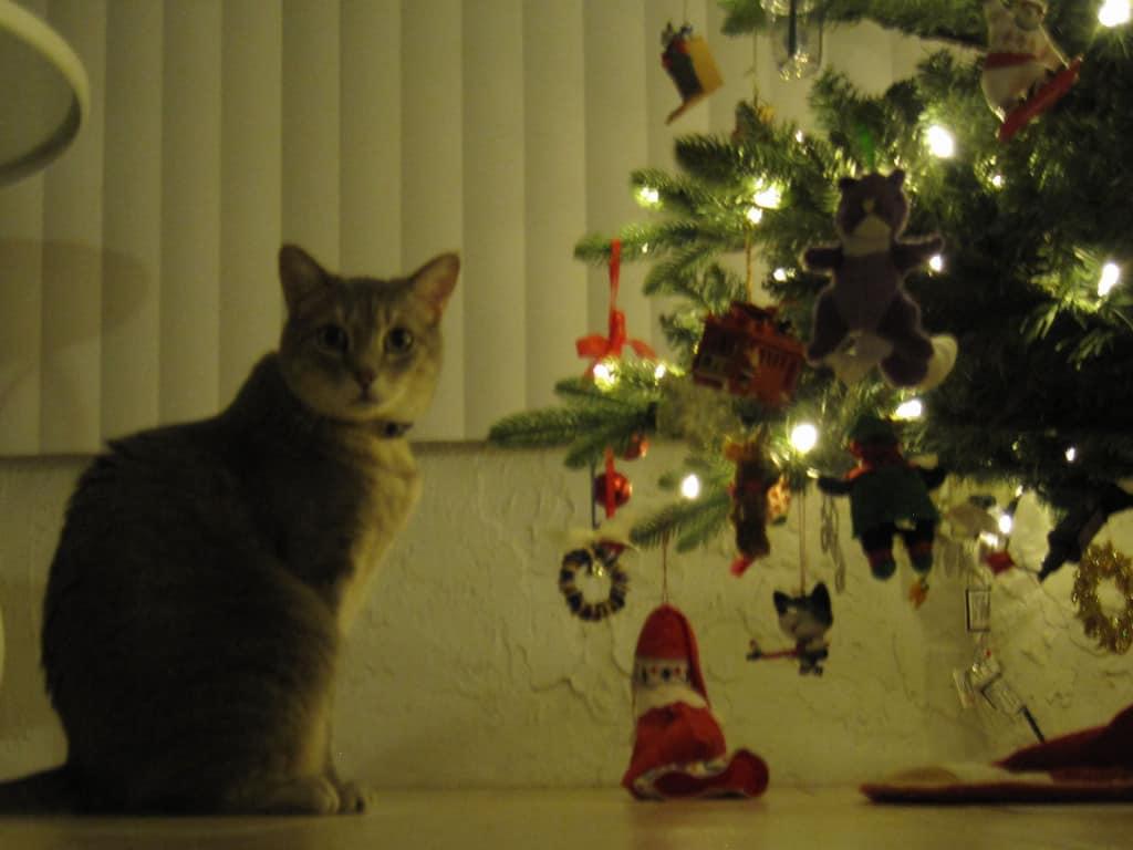 Pierre Next to the Christmas Tree Night 2013