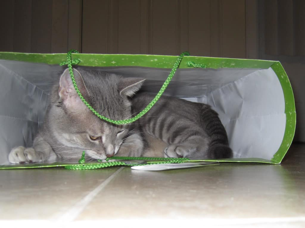 Pierre and the Gift Bag