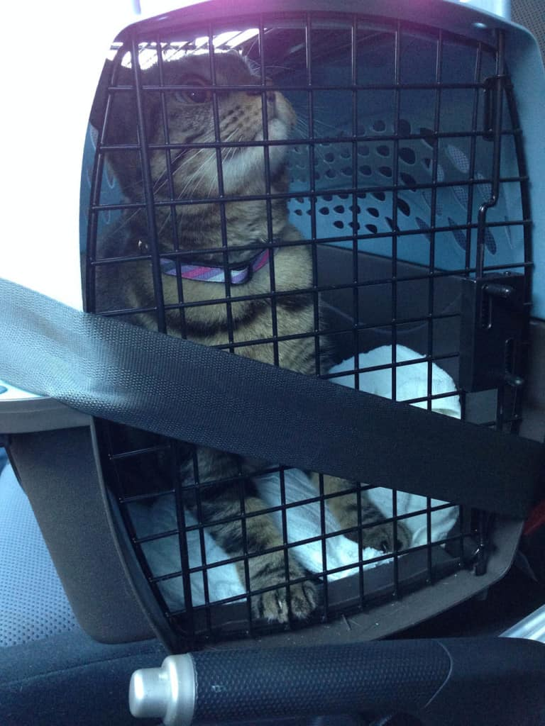 Ashton in Cat Carrier