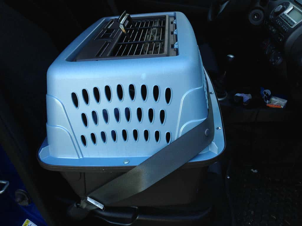 Cat Carrier Buckled In Car