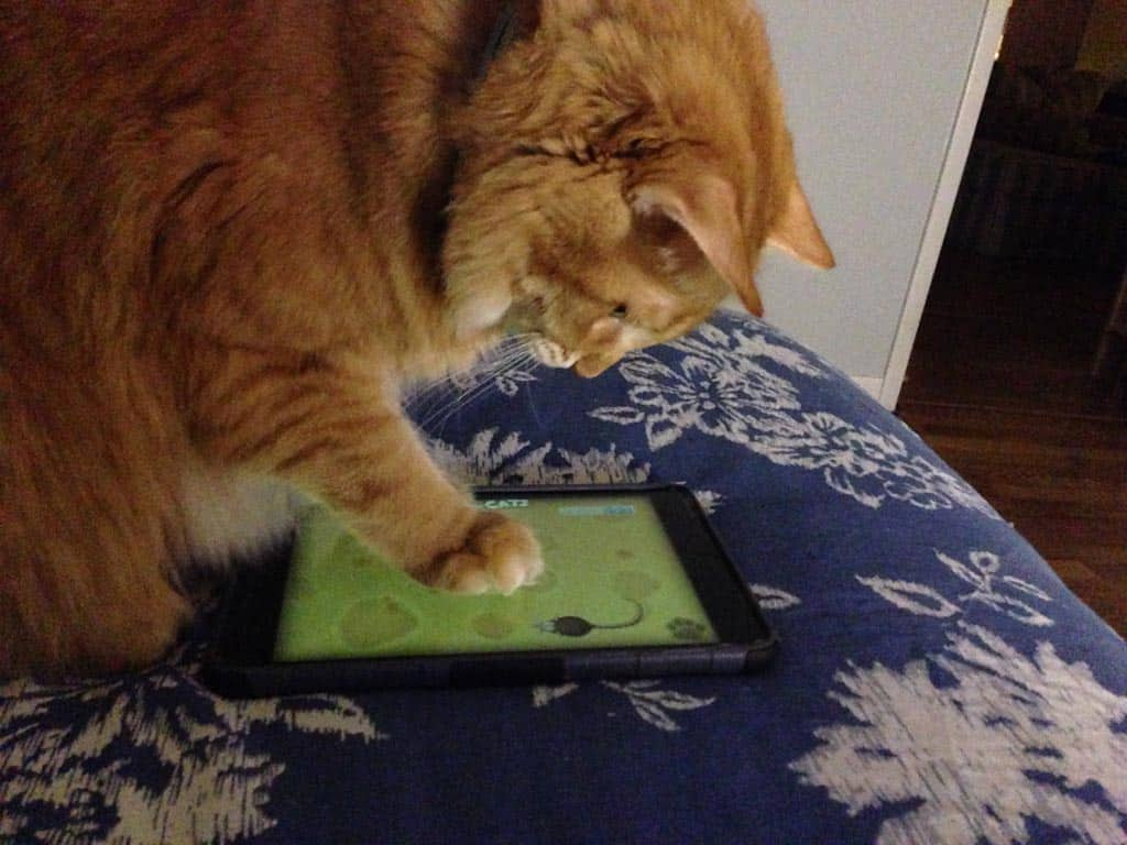 Newton_Gets_the_iPad_Mouse