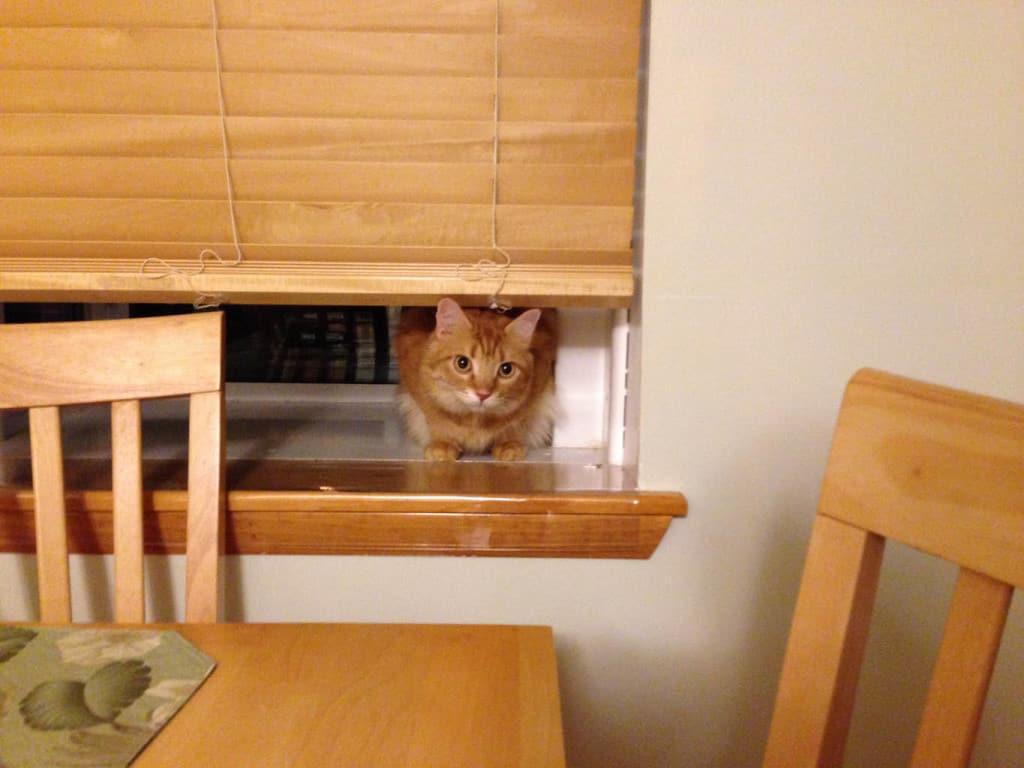 Newton_awaits_dinner_01