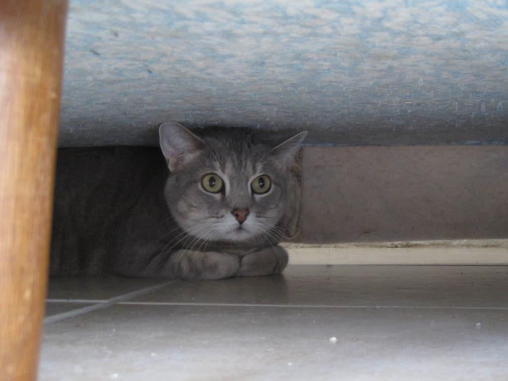 Pierre hides under sofa