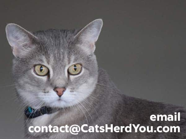 gray tabby cat with contact email address