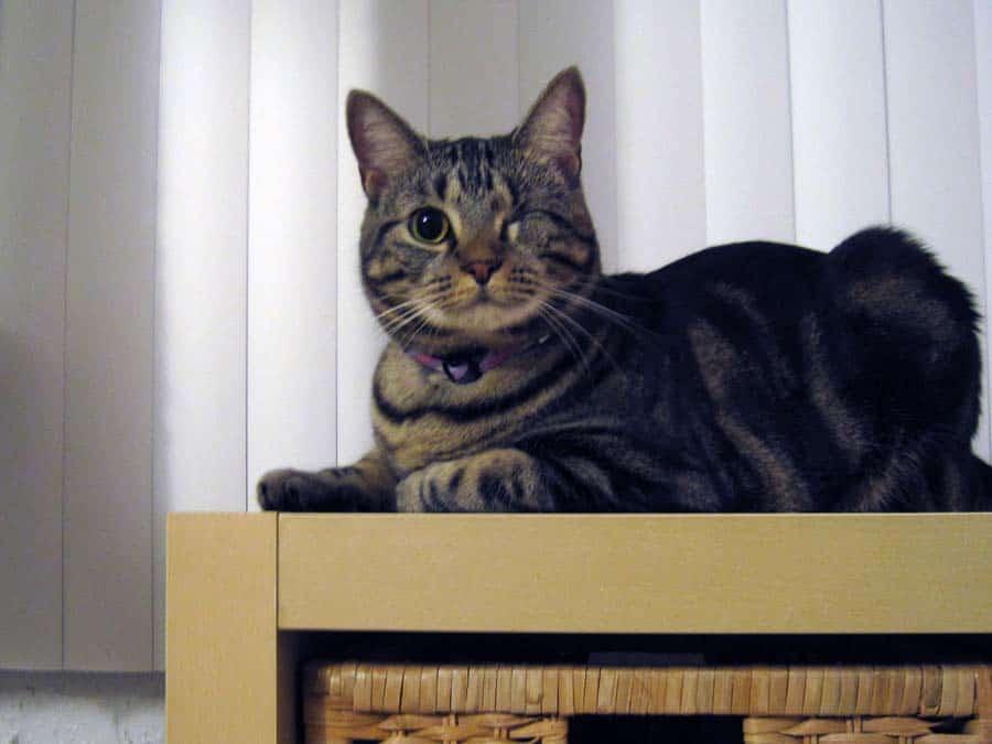 Ashton sitting on end of shelf