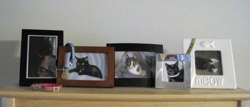 Framed Cat Photos on Shelf
