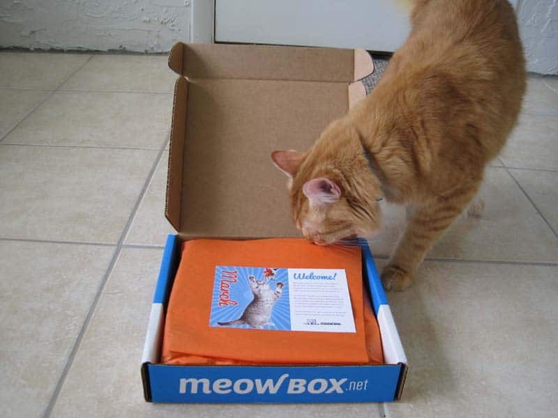 MeowBox_sm05