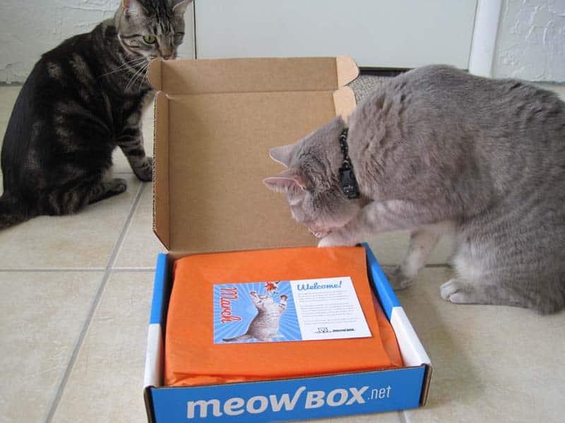 MeowBox_sm09
