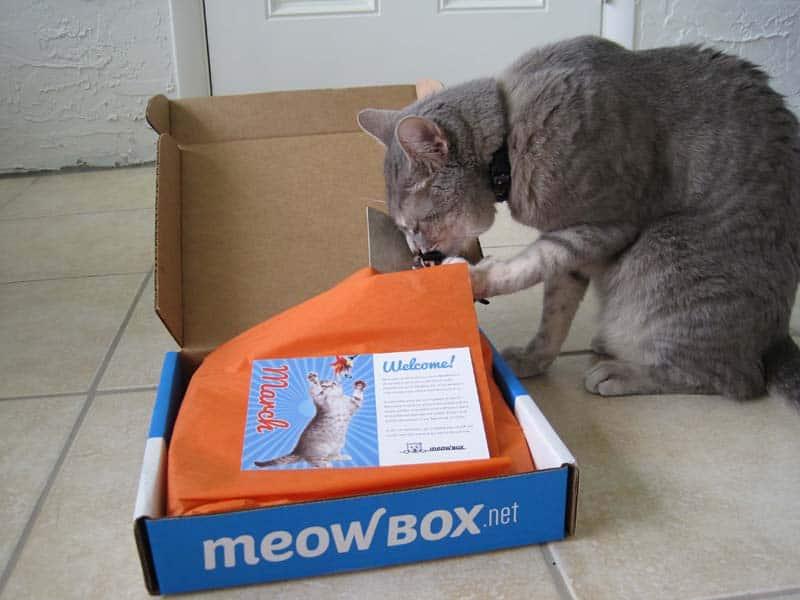 MeowBox_sm12