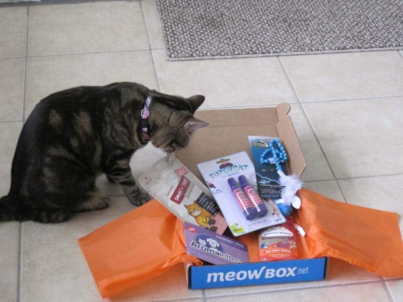 MeowBox_sm36