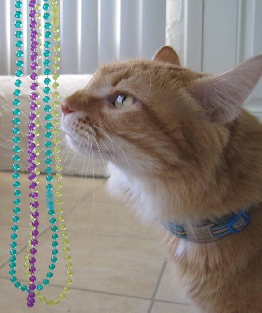 Newton_beads01a_sm