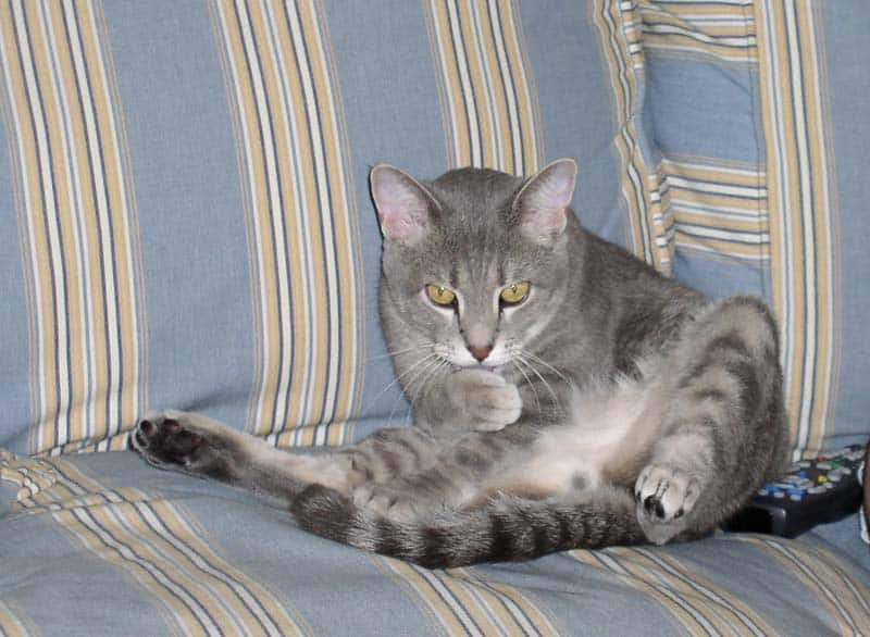 Pierre sits upright on sofa