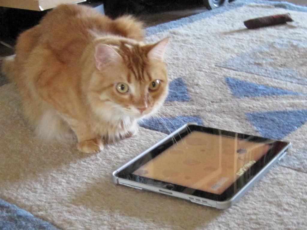 Newton watches the iPad, his armpit floof on display
