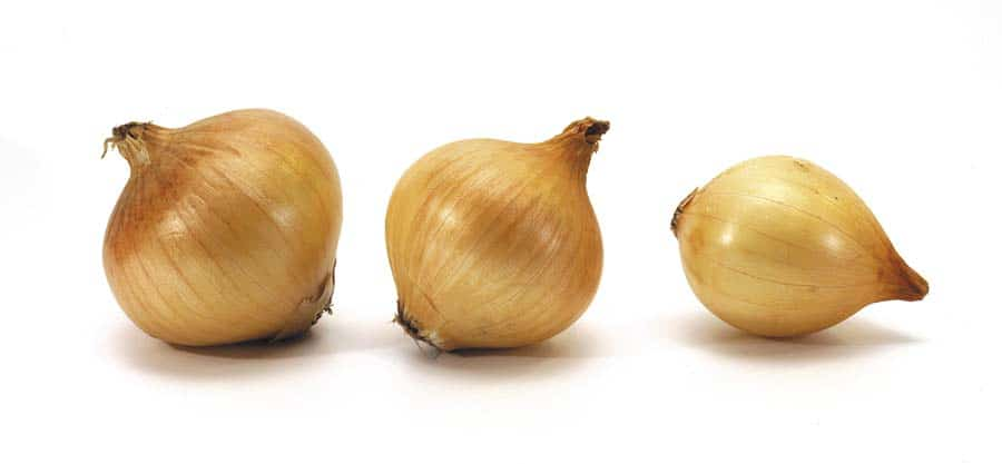 Can Onion Cause Red Urine In Cats