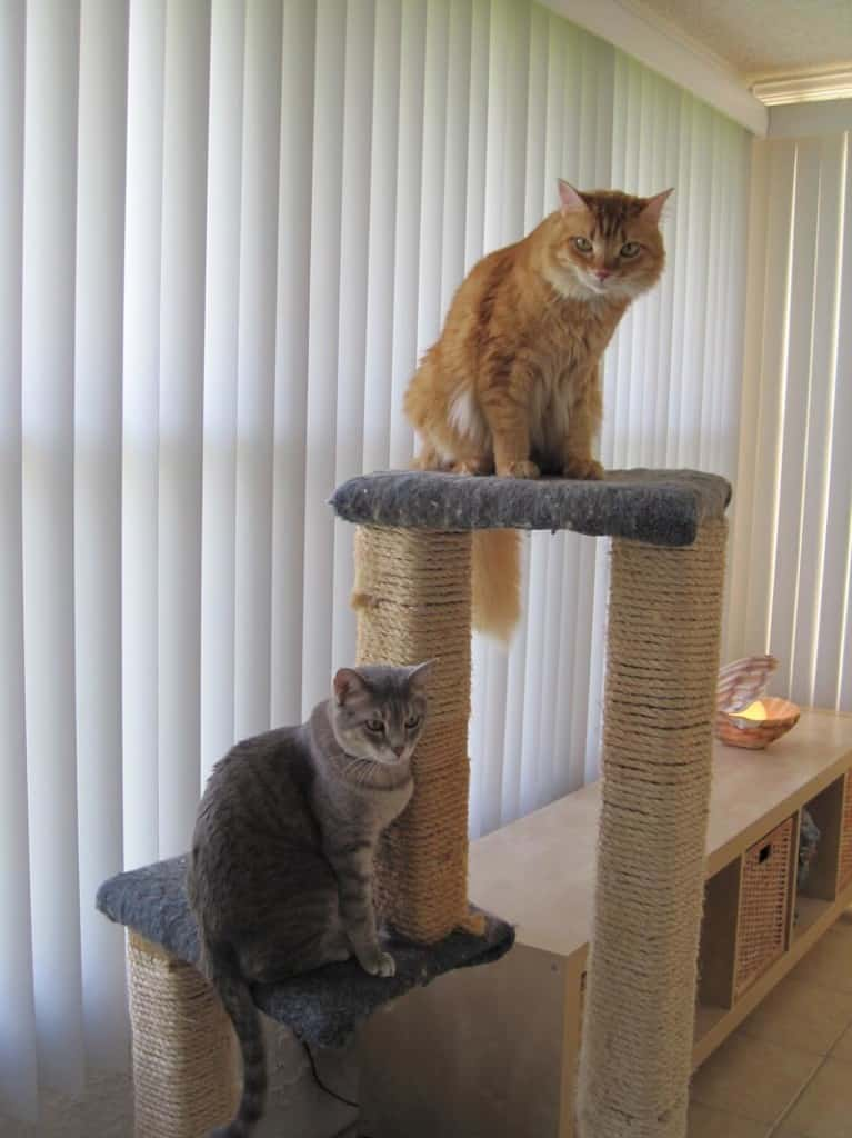 Pierre and Newton on Cat Tree