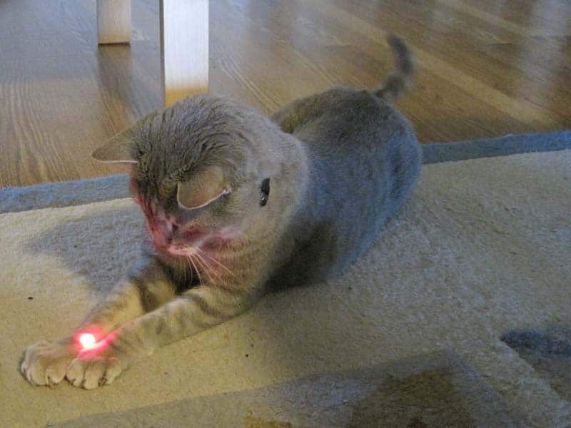 Pierre and the red dot