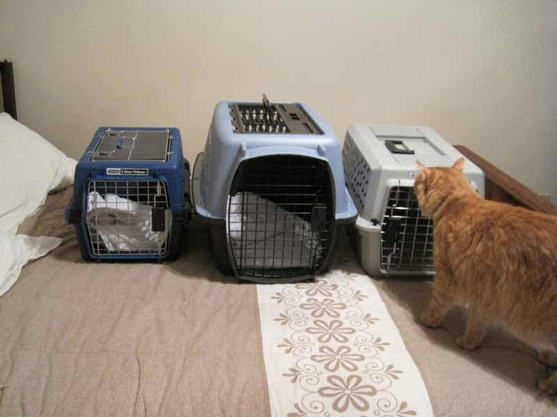 Newton Inspects Cat Carriers