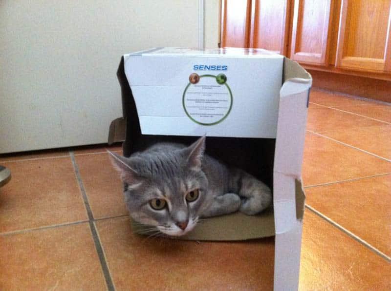 Pierre_food_tornado_box