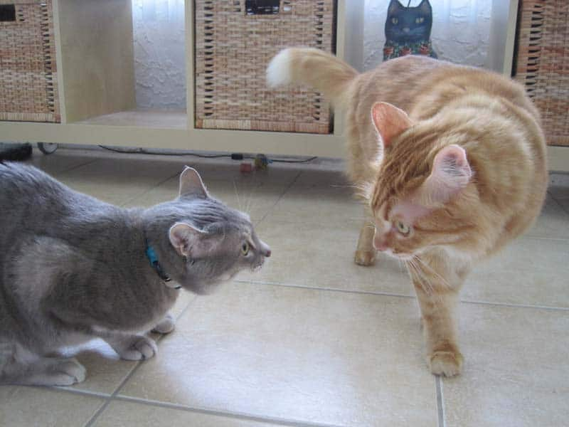 Pierre and Newton face off