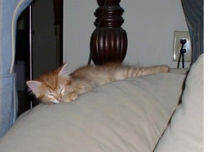 Newton as a kitten, sleeping
