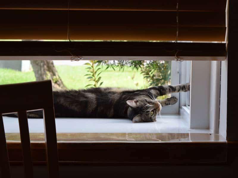 Ashton_lounges_in_kitchen_window01_sm