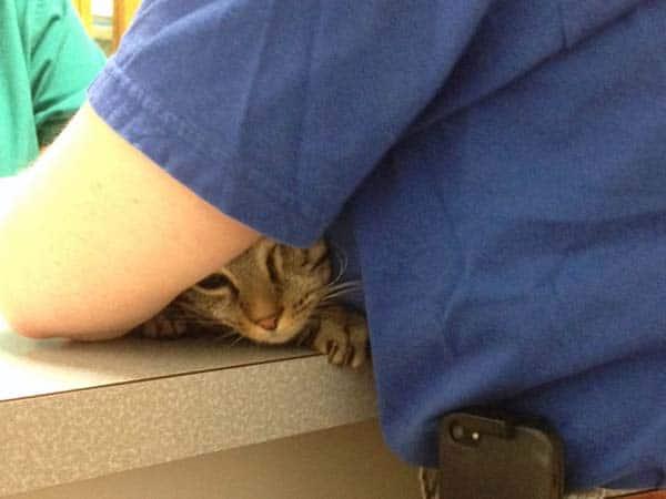 Ashton_hiding_under_arm_sm