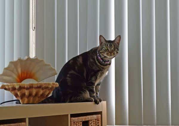 Ashton by the window