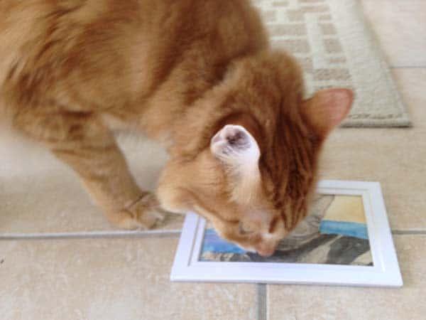 Newton examines watercolor