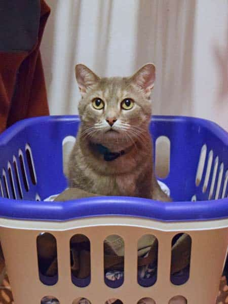 PIerre_laundry_basket_sm
