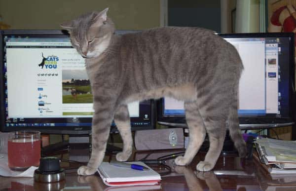 Pierre in front of computer monitors