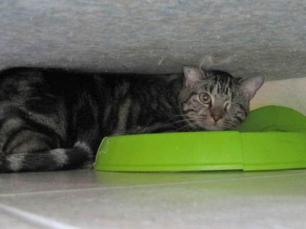 Ashton_hides_under_sofa_sm