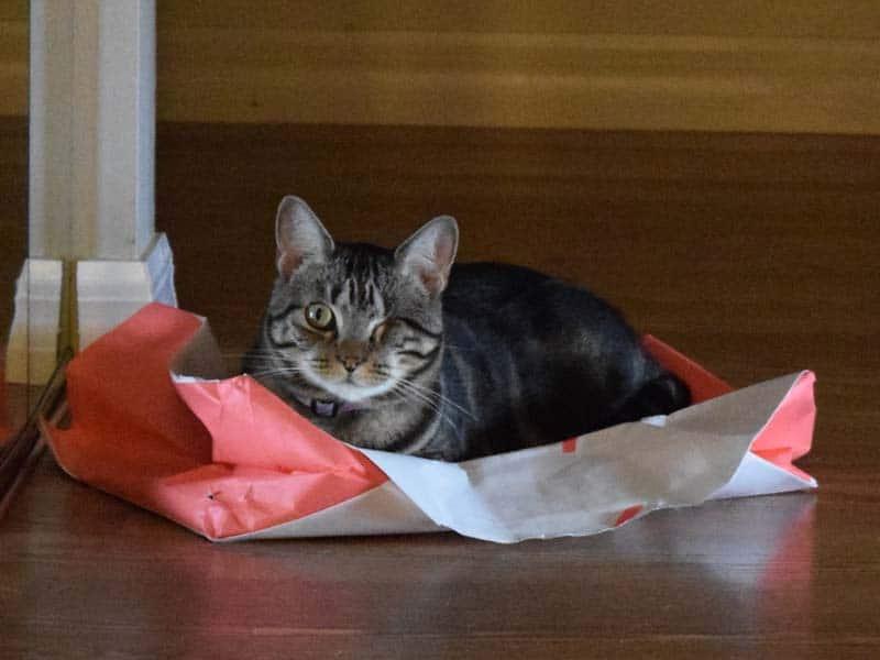 Ashton atop paper bag