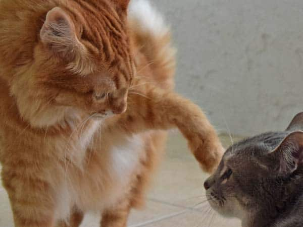 Newton reaches out a paw to Pierre
