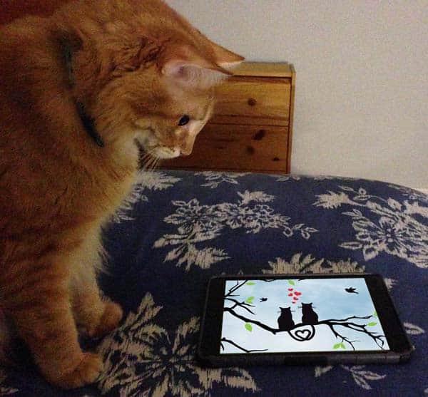 Ashton finds images of Ashton and Mr. Jinx on iPad