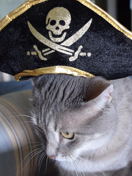 Pierre_doesnt_like_pirate_hat_01_sm