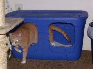Timmy Tomcat's custom litterbox made from a storage tote