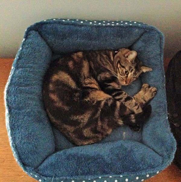 Ashton in cuddly bed