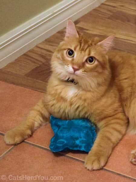 Newton_and_tiedye_catnip_03_wm