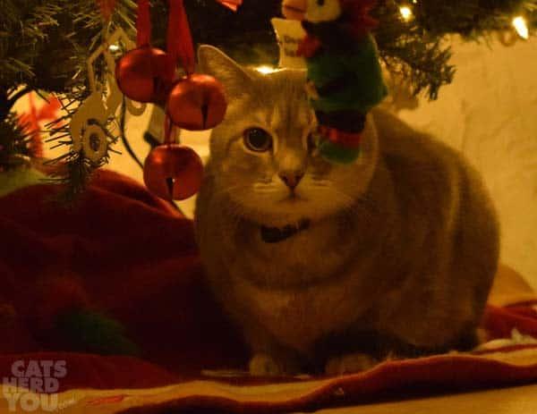 Pierre under Christmas tree at night