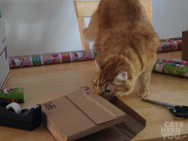 Newton checks the too-small box