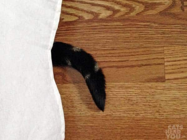 Ashton's tail peeks out from under the bed