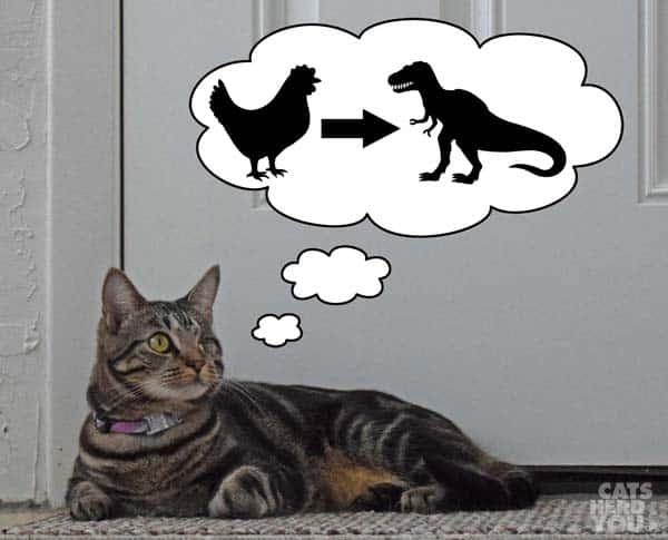 Ashton_thinks_about_chicken_extinction_wm