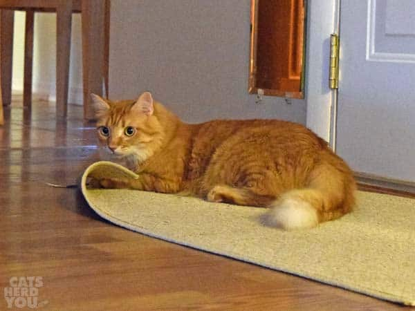 Newton and the rug