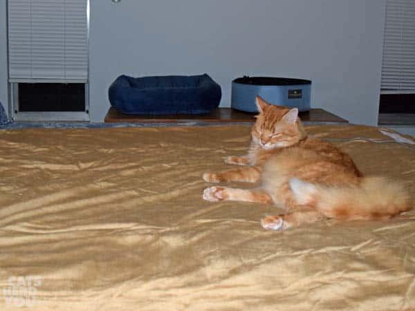 Newton on heated blanket