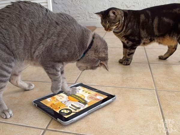 Pierre_Ashton_iPad_chicken_wm