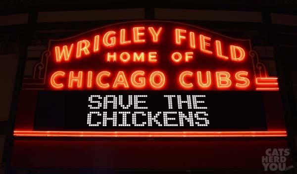 Wrigley_LED_Save_Chickens_wm