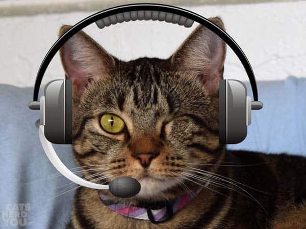 Ashton ready to take your call