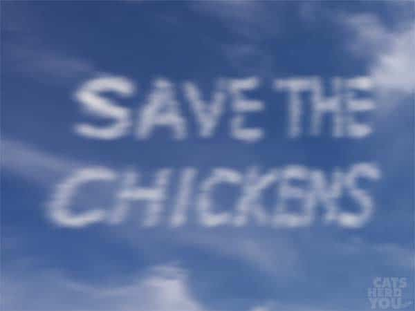 save the chickens skywriting is blurry