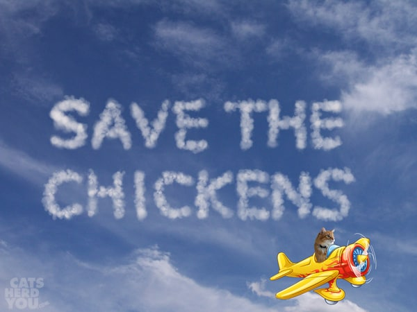 save the chickens skywriting