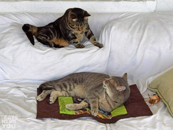 Ashton & Pierre on sofa